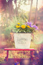 Vintage Flower  Bucket  With Garden Flowers On Red Little Stool Over Summer Or Autumn Nature Stock Image - 55977441