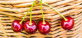 Four Pie Cherries Hanging On Wicker Basket Royalty Free Stock Photography - 55993737