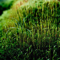 Moss Royalty Free Stock Photo - 5600225