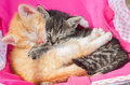 Kitten Sleeping Together Stock Photography - 56019572