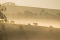 Cows On The Hills At Dawn Royalty Free Stock Photos - 56025138