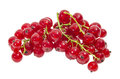 Red Currant Royalty Free Stock Photos - 56036388
