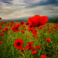 Poppy Field Royalty Free Stock Images - 56053689