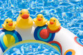 Rubber Ducks  Stock Images - 5619174