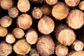 Stacked Timber Logs Royalty Free Stock Photos - 5622658