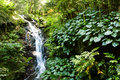 Small Waterfall In The Woods Stock Images - 5629184