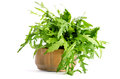 Fresh Arugula Beam In Wooden Salad Bowl Stock Images - 56211484