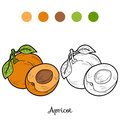 Coloring Book: Fruits And Vegetables (apricot) Royalty Free Stock Photo - 56224145