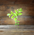 Plant Grows In Old Wood Crack And Symbolizes Renewal And Freshness. Royalty Free Stock Image - 56264276