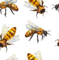 Watercolor Seamless Pattern With Bee Stock Photo - 56264470