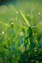 Grass With Dew Drops Stock Images - 56290284