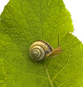 Snail Stock Photos - 5633003