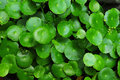 Green Leaves Royalty Free Stock Photo - 5635175