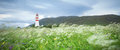 Flowers In Summer Breeze And Lighthouse Royalty Free Stock Photos - 56316348