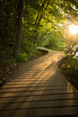 Wood Boardwalk Trail In Sunset Woods Forest Stock Image - 56321751
