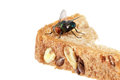 Blow Fly Royalty Free Stock Photography - 56338377