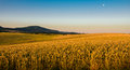 Landscape At Sun With Fields And Trees Royalty Free Stock Image - 56361566