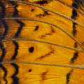 Orange Butterfly Wing Stock Images - 56384294