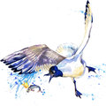 Seagull T-shirt Graphics. Seagull Illustration With Splash Watercolor Textured  Background. Unusual Illustration Watercolor Seagul Stock Photography - 56391792