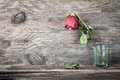 Dried Rose Royalty Free Stock Image - 56399046