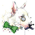 Bull Terrier Dog T-shirt Graphics. Dog  Illustration With Splash Watercolor Textured  Background. Unusual Illustration Watercolor Royalty Free Stock Photo - 56413195