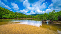 Mangrove Forest Stock Photo - 56414690