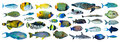Tropical Fish Collection Royalty Free Stock Images - 56422059