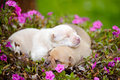 Newborn Puppies With Flowers Royalty Free Stock Photo - 56452675