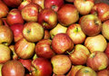Braeburn Apples Stock Photos - 5655463