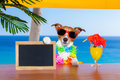 Cocktail Dog Royalty Free Stock Image - 56507206