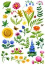 Flower Garden Watercolor Royalty Free Stock Images - 56539539