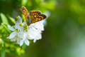 Butterfly Feeding On Wildflowers Royalty Free Stock Photos - 56552988