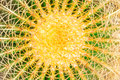 Midsection Yellow Green Cactus Royalty Free Stock Photography - 56589987