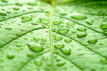 A Macro Shot Of Wet Leaf Stock Images - 5669274