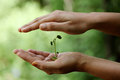 Hand Holding Small Plant Stock Images - 56609774
