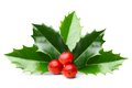 Holly Berry Leaves Isolated Stock Image - 56630921