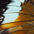Orange Butterfly Wing Royalty Free Stock Image - 56635596
