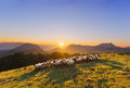 Flock Of Sheep In Saibi Mountain Royalty Free Stock Photos - 56642998