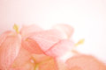 Sweet Color Flowers In Soft Color And Blur Style On Mulberry Paper Texture Stock Photo - 56647540