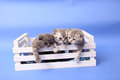 Kittens In A Wooden Crate Royalty Free Stock Photography - 56694667