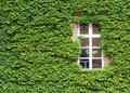 Ivy Covered Wall Royalty Free Stock Photography - 5676547
