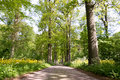 Forest Road. Stock Image - 56700091