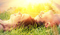 Young, Happy Couple Lying In The Sun Stock Photo - 56703940