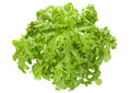 Lettuce Salad Leaf Stock Photo - 56722440