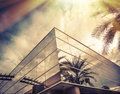 Sun Shining On Window Of Office With Palm Tree Reflecting In Glass Stock Images - 56748494