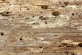 Close-up Of Old Pine Tree Rough Cross Section Background Texture Royalty Free Stock Photography - 56758727