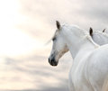 Two White Horses Royalty Free Stock Photography - 56775157