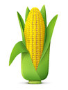 Ear Of Corn With Leaves Close Up Royalty Free Stock Photography - 56775307