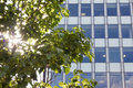 Sunlight Through Tree By Modern Office Building. Royalty Free Stock Photography - 56782287