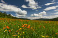 Amazing Views Of The Flowery Meadow Royalty Free Stock Images - 56810899